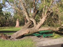 Hurricane Irma Damage. Storm Damage from Hurricane Irma.  Trees crushed this park bench in Kennedy Park in Coconut Grove Royalty Free Stock Images