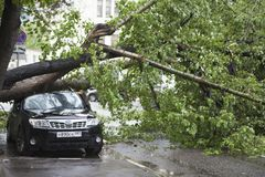 Hurricane in Moscow knocked down trees. The tree fell on an expensive car. MOSCOW, RUSSIA - 26 June, 2017: Hurricane in Moscow knocked down trees. The tree fell royalty free stock photo
