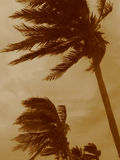 Hurricane Palms stock photos