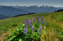 Hurricane ridge Stock Image