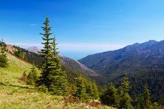 Hurricane Ridge. Olympic National Park, Washington, USA Royalty Free Stock Photos