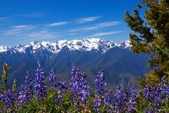 Hurricane Ridge. Olympic National Park, Washington, USA Royalty Free Stock Photo