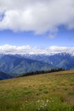 Hurricane Ridge Royalty Free Stock Photography