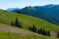 Hurricane Ridge Hills Royalty Free Stock Images