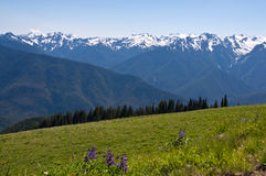 Hurricane Ridge mountain landscape, flower meadow Royalty Free Stock Images