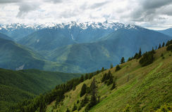 Hurricane Ridge of Olympic National Park Stock Photography