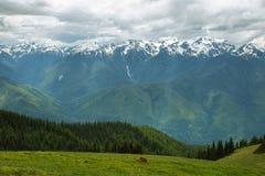 Hurricane Ridge of Olympic National Park, WA, USA Royalty Free Stock Photo