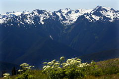 Hurricane Ridge Olympic National Park Washington Royalty Free Stock Photo