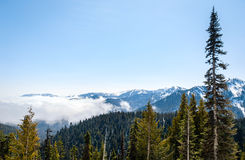 Hurricane Ridge, Olympic National Park Stock Photos