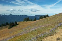 Hurricane Ridge Royalty Free Stock Photo