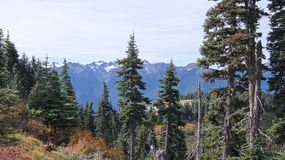Hurricane Ridge, Olympic National Park, WASHINGTON USA - October 2014: A panoramic view on the Peninsula mountains Royalty Free Stock Photography