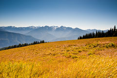 Hurricane Ridge Royalty Free Stock Photos