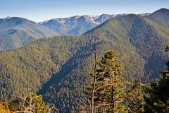 Hurricane Ridge Stock Images