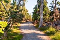 Hurricane Ridge path Stock Photo