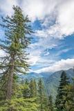 Hurricane Ridge Road View, Olympic National Park, WA Royalty Free Stock Image