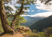 Hurricane Ridge Road View, Olympic National Park, WA Royalty Free Stock Photos