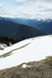 Hurricane ridge in summer Royalty Free Stock Photography