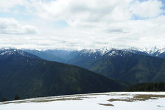 Hurricane ridge in summer Royalty Free Stock Images
