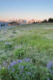 Hurricane Ridge sunrise Royalty Free Stock Images