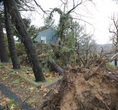 Hurricane Sandy house surrounded by uprooted tree Royalty Free Stock Images
