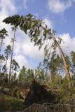 Hurrikan Lizenzfreie Stockbilder