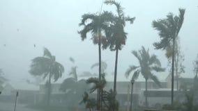 Hurrikan, ein starker Wind mit dem Regen, der versucht, die Palmen, oben zerreißend zu brechen, grünt stock footage