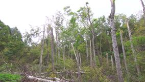 Hurrikaneffekte im Wald stock footage