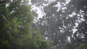 Hurrikanwinde und -regen im Sommer stock video