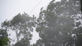 Hurrikanwinde und -regen im Sommer stock footage