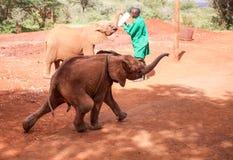 Hurt elephant Royalty Free Stock Photography