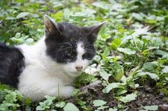 Hurt stray cat Stock Photos