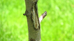 Hurt tree. Pic of injured tree Stock Image