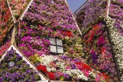 Hus av färgrika blommapetunior i mirakelträdgård Royaltyfri Foto