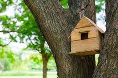 Hus av fåglarna i träden royaltyfri fotografi