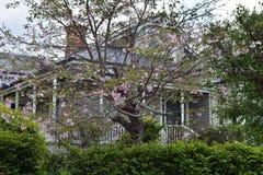 Hus bak blommande träd Royaltyfri Fotografi