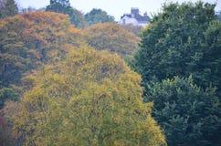 Hus bland träd Royaltyfri Foto