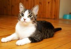 Hus Cat Satisfaction Fotografering för Bildbyråer