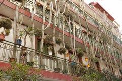 Hus i Calella med massor av blommor och kakturs Arkivfoto