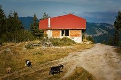 Hus i de Rhodopes bergen arkivbild