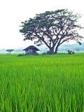 Hus i risfältet Royaltyfria Bilder