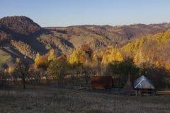 Hus i skog Arkivbild