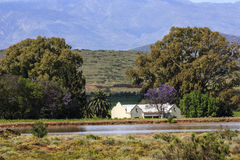 Hus i vingårdarna royaltyfria bilder