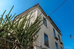 Hus med kaktuns, liten gata av Italien, lopp royaltyfri foto