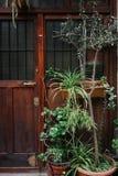 Hus med växter Fotografering för Bildbyråer