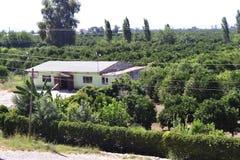 Hus mellan gröna träd Royaltyfri Foto