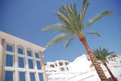 hus nära palmträd Fotografering för Bildbyråer
