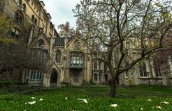 hus New York Magnoliaträd Arkivbild