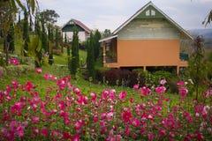 Hus och härlig trädgård. Arkivbild