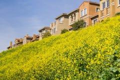 Hus och lös senap på en vårdag, San Jose, Kalifornien arkivbild
