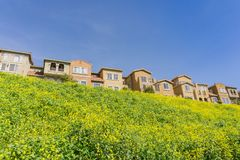 Hus och lös senap på en vårdag, San Jose, Kalifornien fotografering för bildbyråer